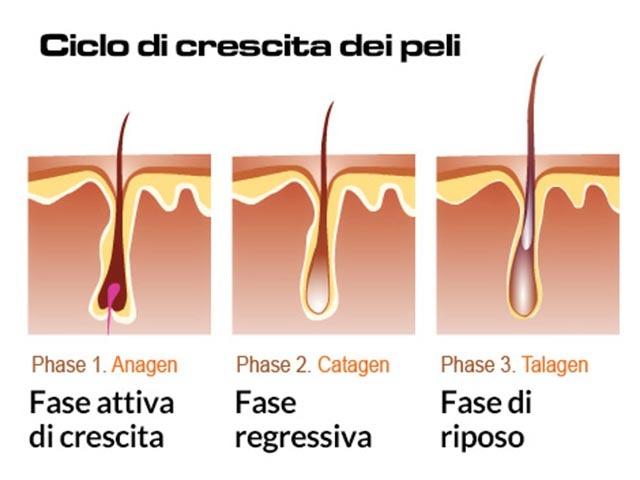 ciclo di vita pelo